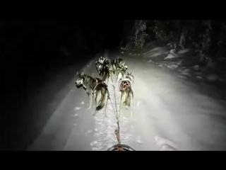 Ночной бег в упряжке _ рабочие сибирские хаски