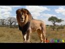 Как говорят животные Голоса и Звуки животных Животные для детей Учим животных Развивающие мультики