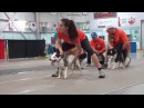 Carleton County Pawtatoes 2016 Flyball Tournament