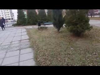 Неизвестная птица в Копейске