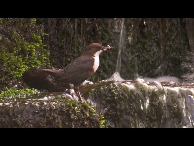 BBC Тайная жизнь птиц Создание гнезда 2 серия