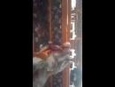 فيديو مسرب من داخل القاعه الكبرى بصنعاء منظر مرعب هذا الفيديو يؤكد ان الانفجار داخلي وليس بطيران... احترقوا وهم جلوس عالكراسي.