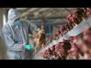 Птушыны грып У Драгічынскім раёне забаранілі прадаваць птушак В Беларуси нача