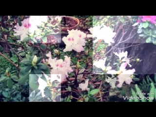 #Ботанический#сад#ранней весной. Выставка тюльпанов