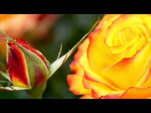 F. Kuhlau: The Last Rose of Summer op.105 for flute and piano