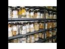 Разграбление и Передача Сероводородным Национального Банка Семян Вавилова Замена Еды ГМО Отравой