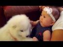 Подборка видео про детей! Смешное Видео дети и животные. Любовь и Взаимопонимание!