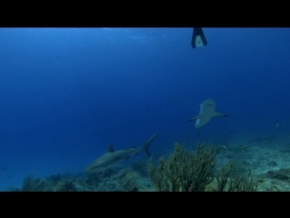 SpeakOut Elementary 2nd Edition. Shark Therapy (Video 12)