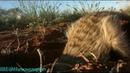 BBC Ребятам о зверятах Суррикат Моррис Документальный 2004