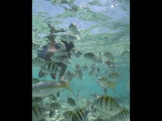 Snorkeling cayo arena