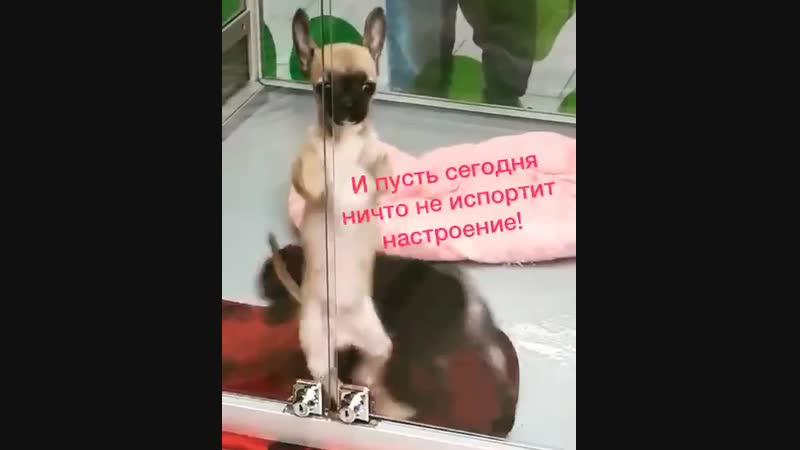 VIDEO 2019 11 10 09 24
