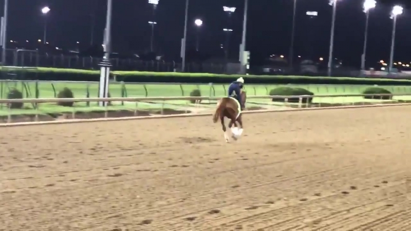 Big horse Hofburg also looking excellent on track for KentuckyDerby