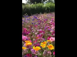 Painting_inspiration_this_morning_at_pengover_green_wildflower_meadow!_🌸🌼🌻.mp4