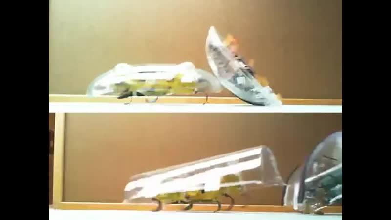 Роботов тараканов научили переворачиваться