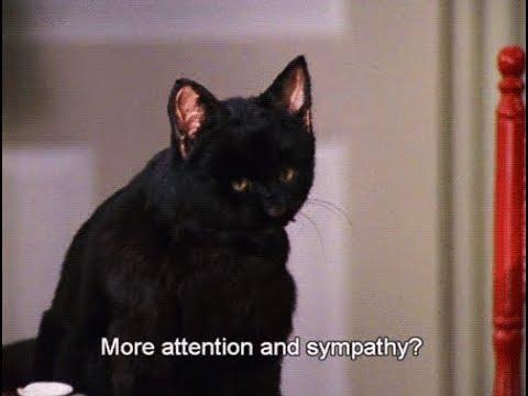 Сабрина маленькая ведьма Все моменты с котом Селем Салем 2 часть смотреть онлайн без регистрации