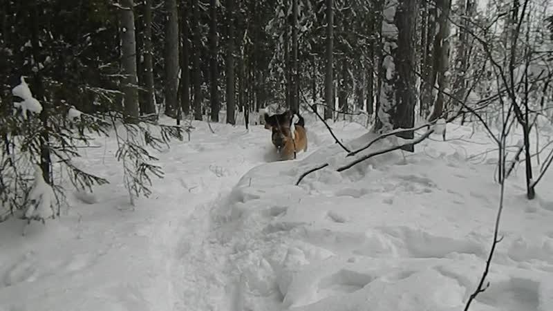Зимняя прогулка Дичков