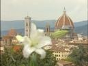Флоренция~Звезда Возрождения