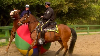 Police Horse Training | Extraordinary Animals | BBC Earth