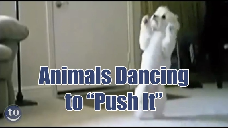 Animals Dancing to Salt n Pepa's 'Push It'