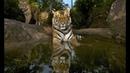 3 марта Всемирный день дикой природы