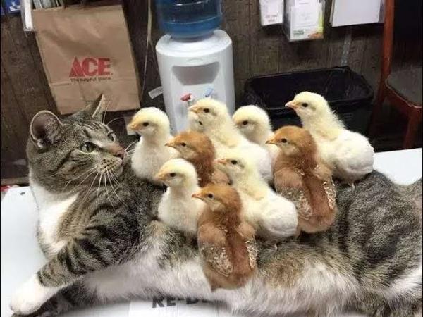 「面白い動物」あり得ないことをする犬, 猫・おもしろ犬, 猫のハプニン12