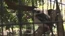 A laughing kookaburra- Tyler Joseph