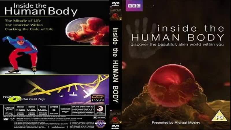 Внутри человеческого тела (02 серия) / Inside the human body (2011) HD 720р. Перевод: ДиоНиК