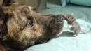 Эта собака-спасатель страдала от депрессии, пока не нашла необычного друга
