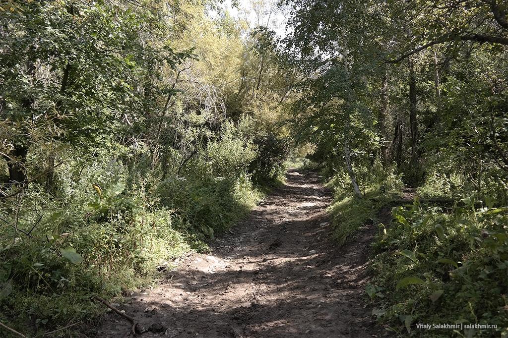 Дорога в Березовую рощу Алматы, 2019