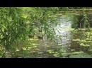 дикие утки в водоёме
