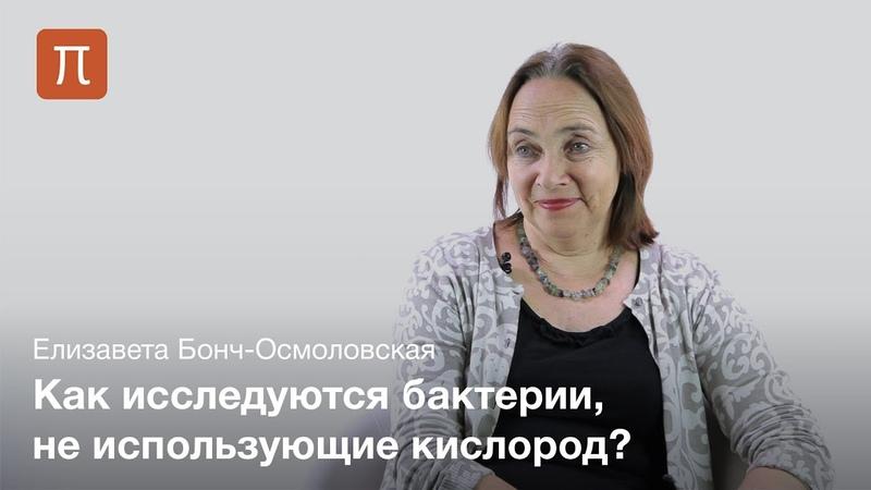 Исследования микробных сообществ в России - Елизавета Бонч-Осмоловская