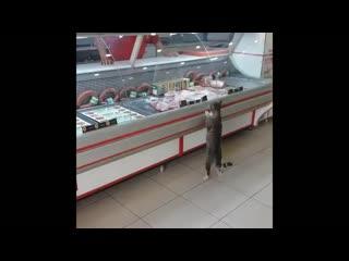 Turkish Man Feeds Cat That Walks In Butcher Shop Every