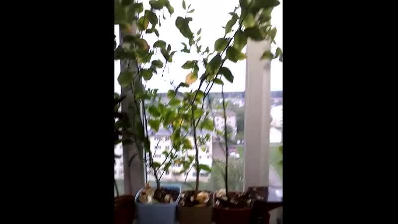 Апельсиновый сад Белоглазовых