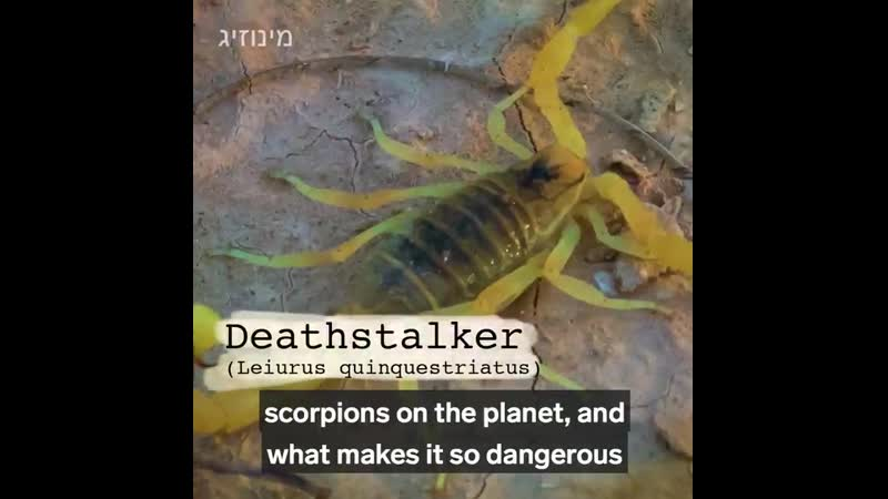 Scorpine- found in scorpion venom -has been used to eliminate malaria in mosquitos