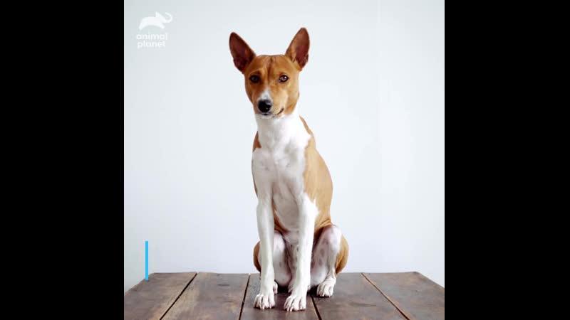 Собаки Animal Planet