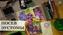 Посев эустомы в мельчайших подробностях / Сроки посева / Дражированные семена