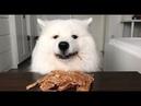 ASMR Dog Eating Homemade Chicken Jerky I MAYASMR