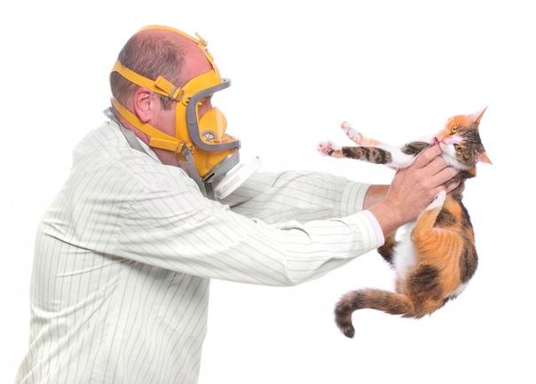 Аллергия на животных. Мифы и реальность., изображение №2