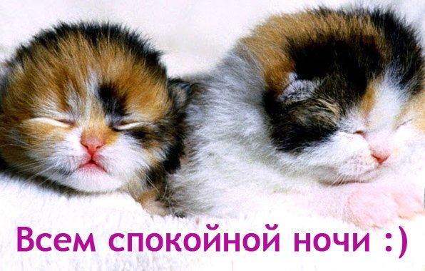 Открытка с животными прикольная спокойной ночи