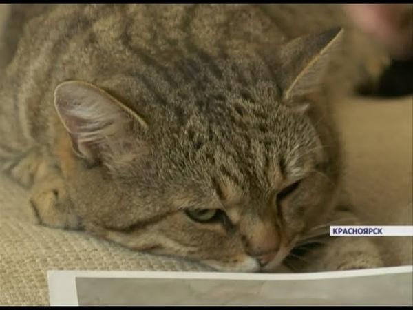 Кот спустя 7 лет вернулся домой хозяйка привела доказательства, что это одно и тоже животное