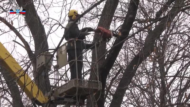 «Зеленстрой» проводит глубокое кронирование деревьев в Донецке.