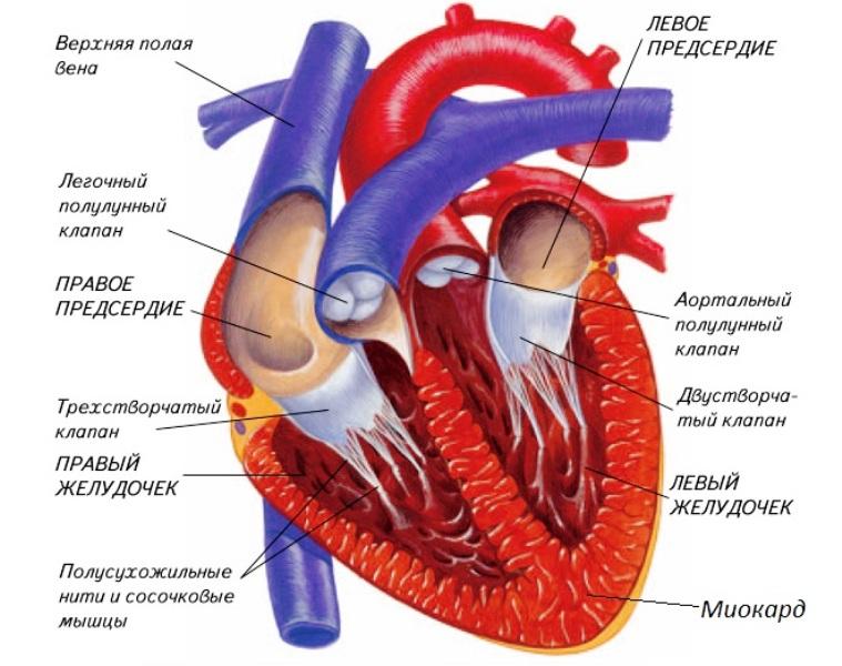 Понимание того, что происходит во время операции на сердце, может помочь некоторым пациентам легче справляться с послеоперационными изменениями.
