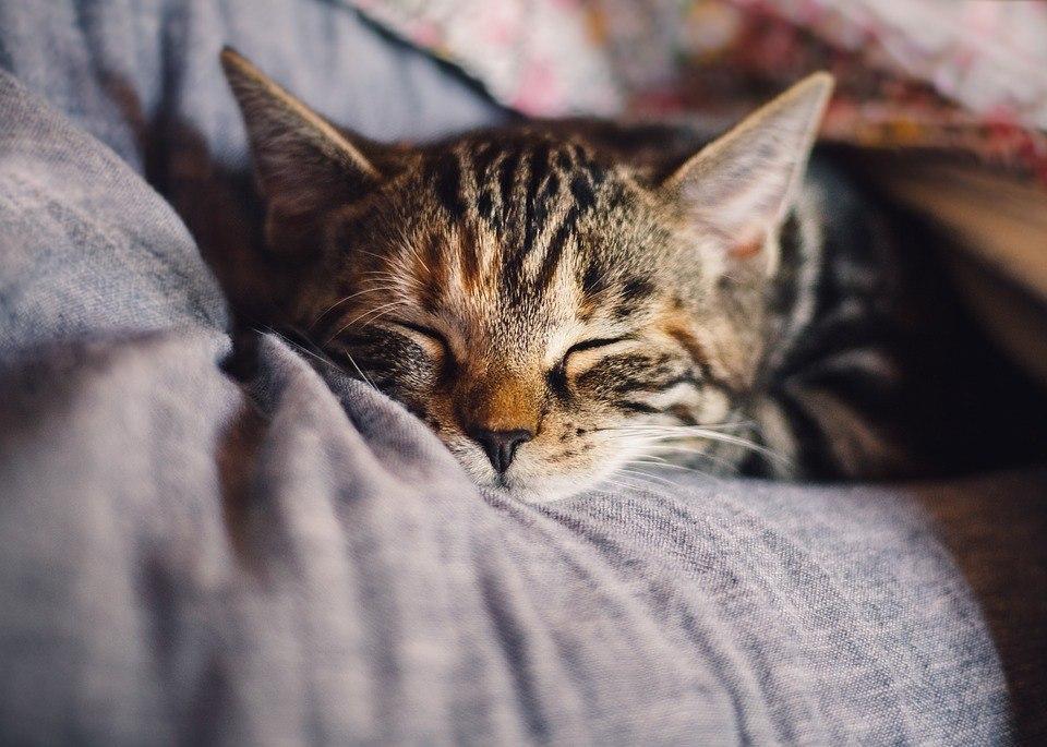 Жители Некрасовки дистанционно помогут кошкам из приютов столицы