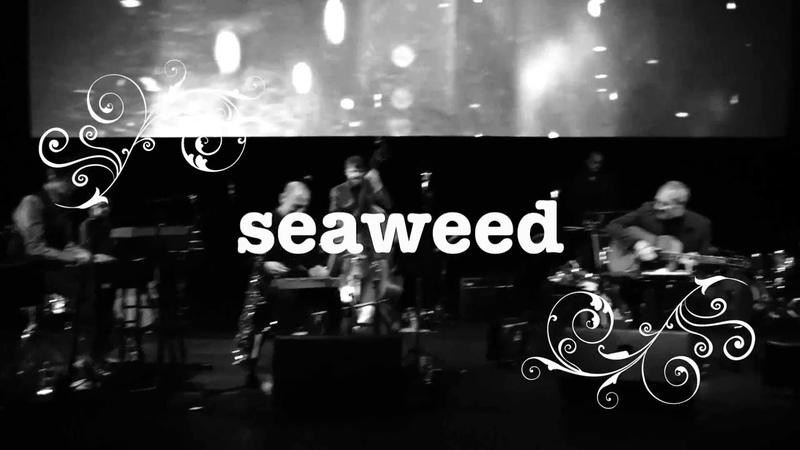 Tindersticks seaweed 2017