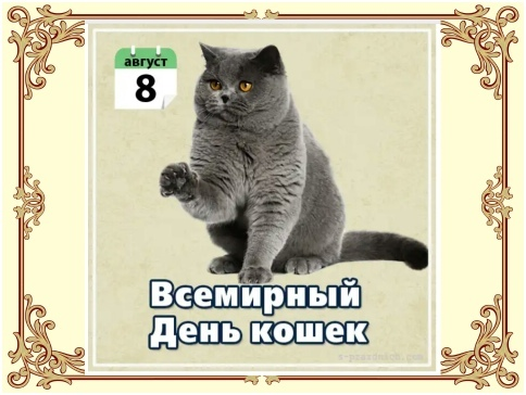 Урок доброты «Эти удивительные кошки», изображение №4