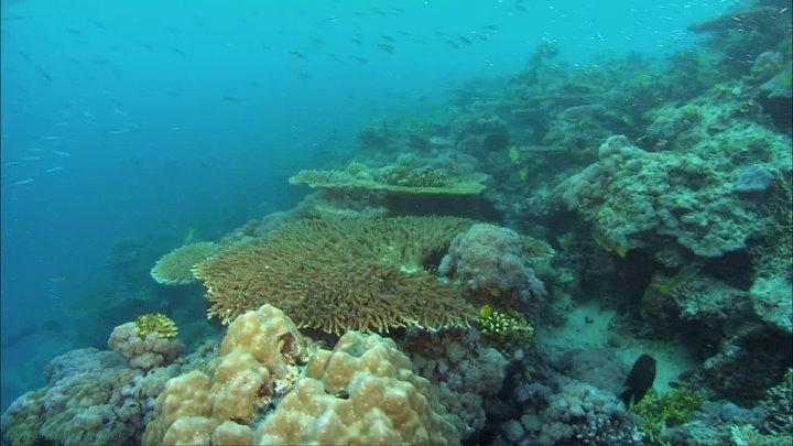 BBC Океаны 3 Красное море Познавательный природа путешествие 2008