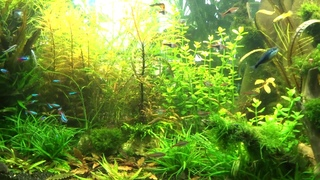 """""""Перенаселение"""" в аквариуме 8 месяцев без подмен"""