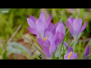 Gardeners World Season 49 Episode 2/30 (March 11, 2016)