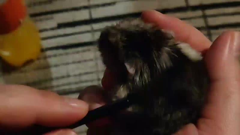 Моц Пузя любит чухи