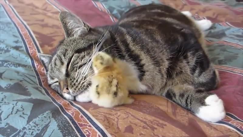 [Animal] Cat and Usura